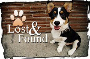 Lost and Found Dog
